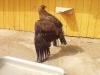 zoo014
